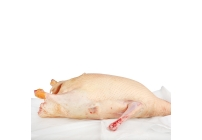 Canard gras sans foie